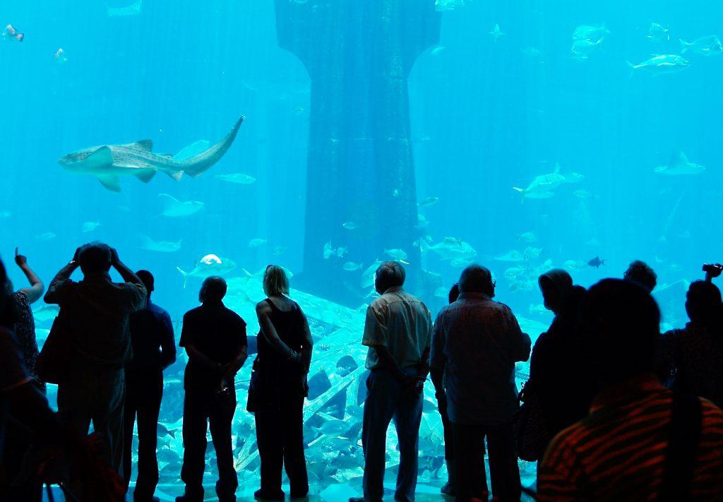 Aquarium The Atlantis