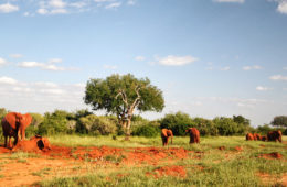 Elefanten im Tsavo-Nationalpark