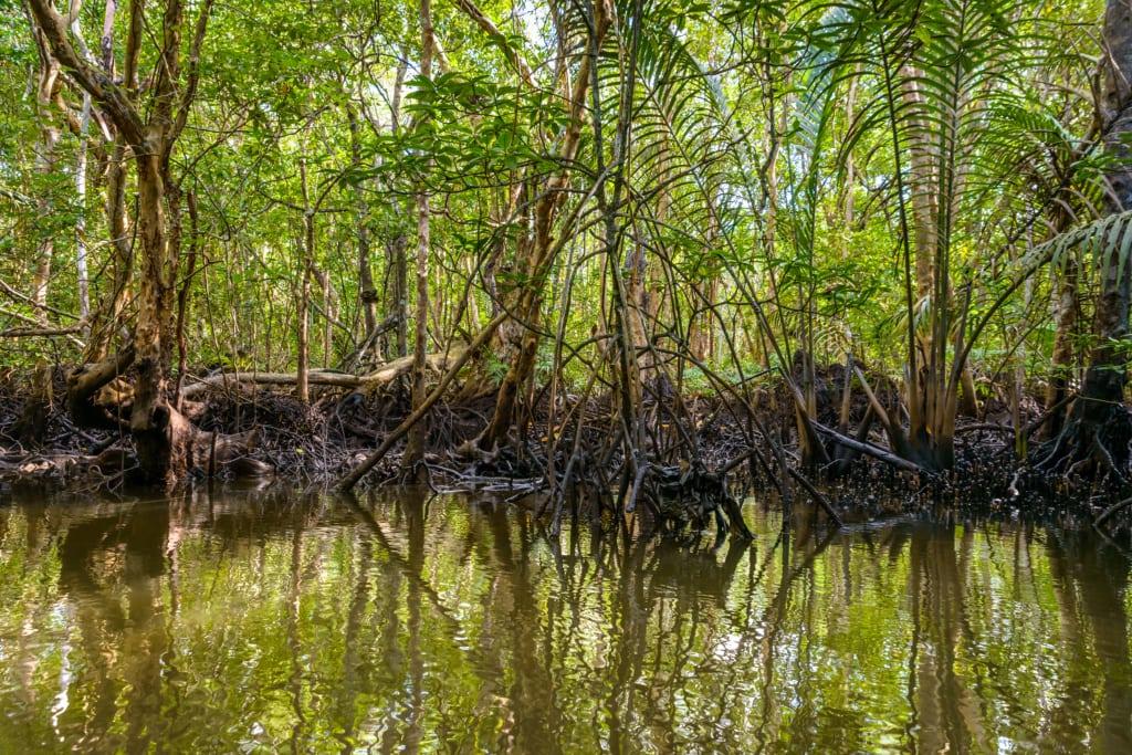 Mangrovenwald auf Bitan Island