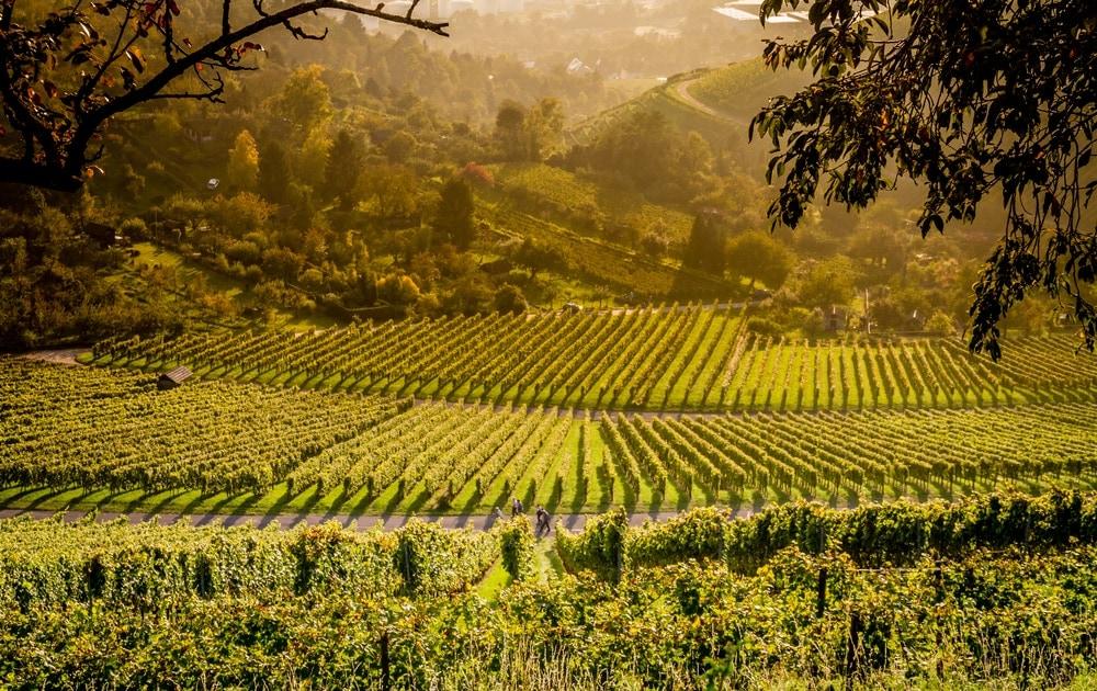 Weinwandern am Rotenberg, Baden-Württemberg