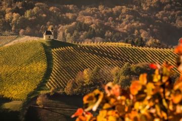 Steiermark,Südsteiermark,Weingut
