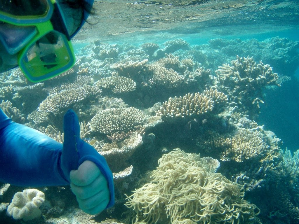 Schnorcheln am Great Barrier Reef