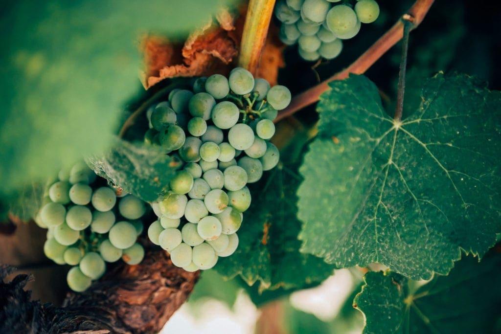 Weinwandern am Kaiserstuhl