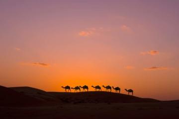 Kamelkarawane in der Wahiba-Wüste im Oman