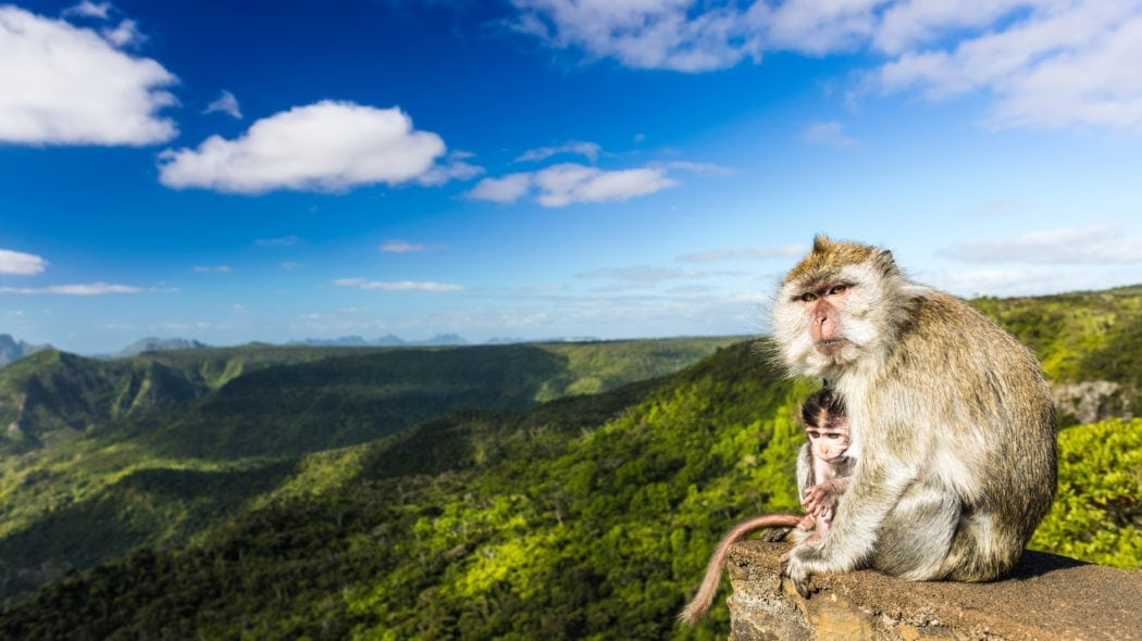 Black River Gorges Nationalpark,Mauritius,Affen