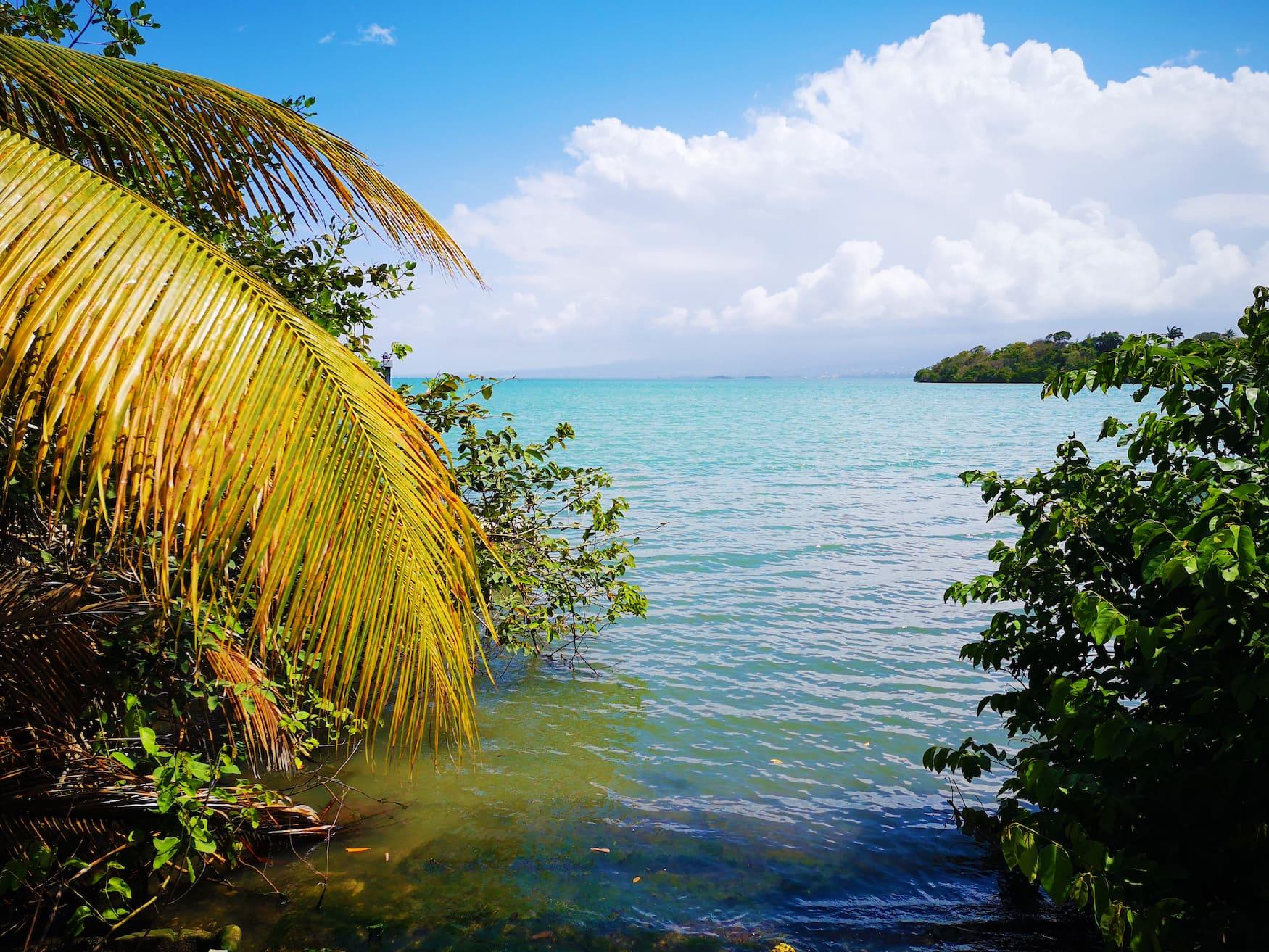 Blick von Mangroven auf Meer in Guadeloupe