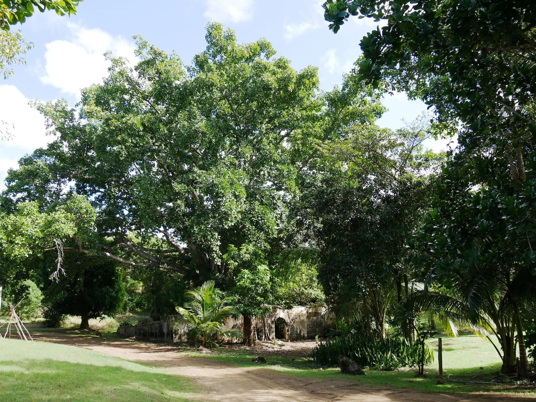 Mystischer Ort auf Guadeloupe