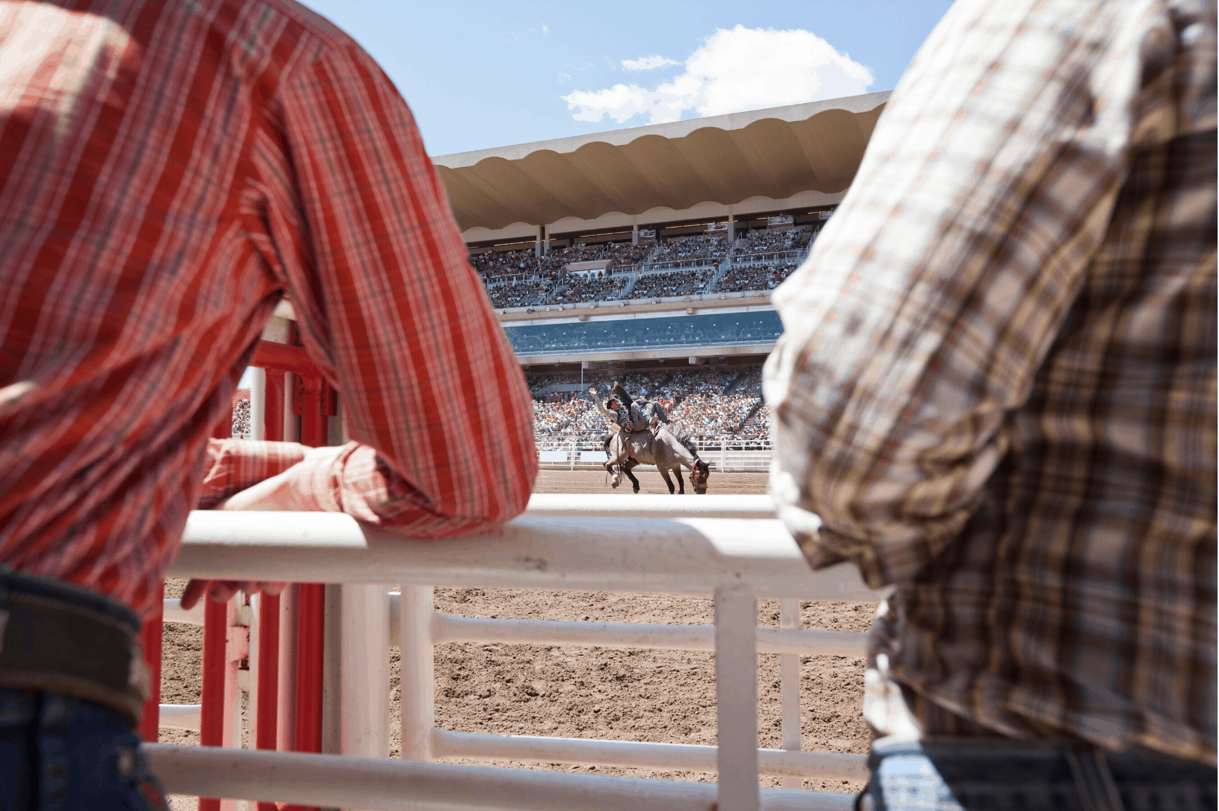 Rodeo in Calgary Stampede