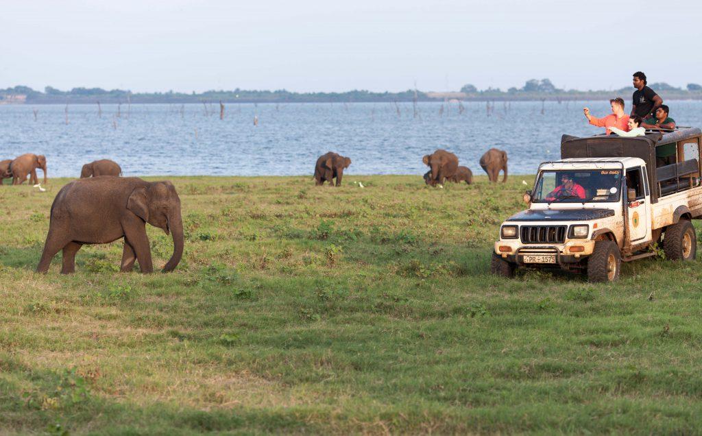 Auge in Auge mit den Elefanten Sri Lankas