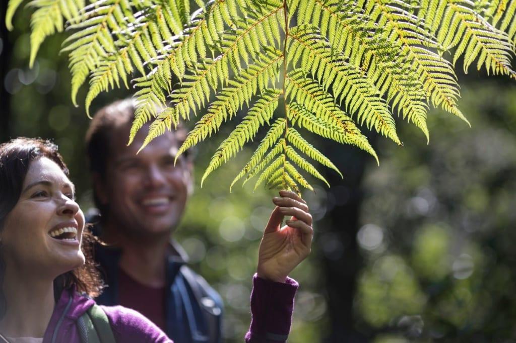 Neuseelands Westküste: Wandern an der Creek West Coast