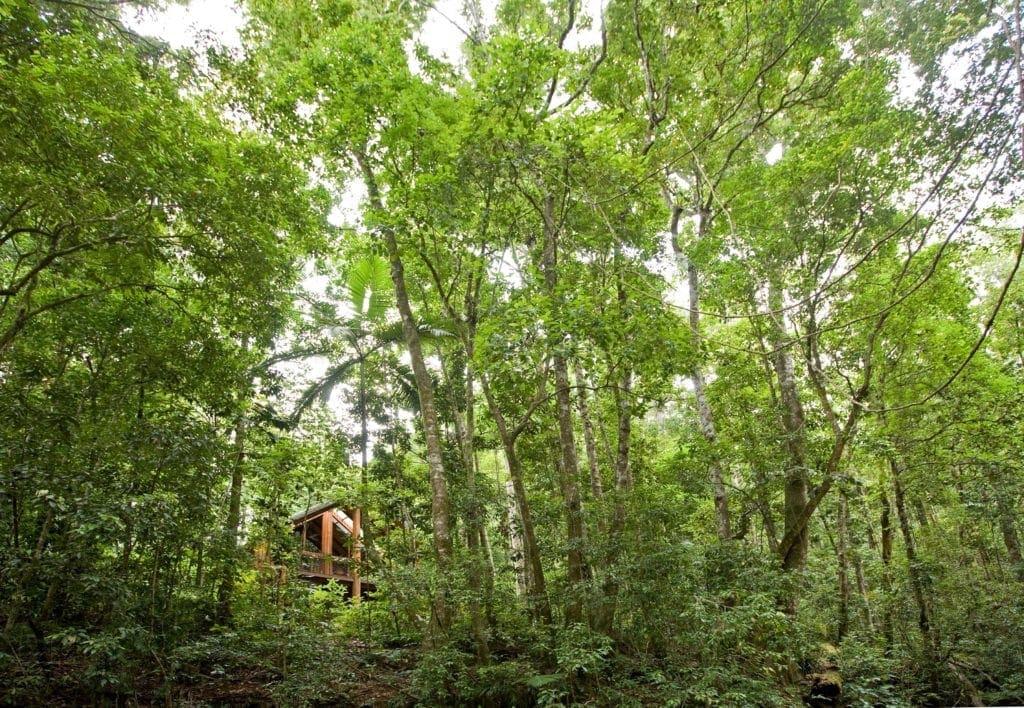 Hotel Canopy Treehouses