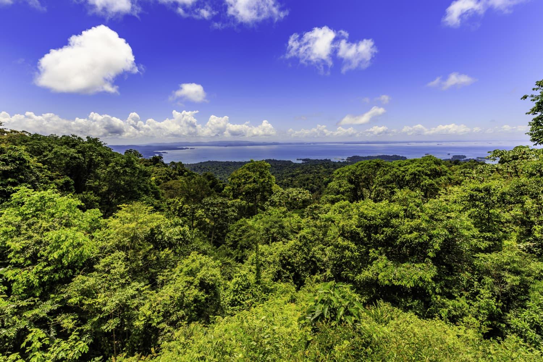 Grüne Landschaften in Suriname