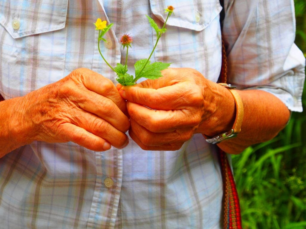 Pflanzenkunde mit Irmgard auf der Kräuterwanderung