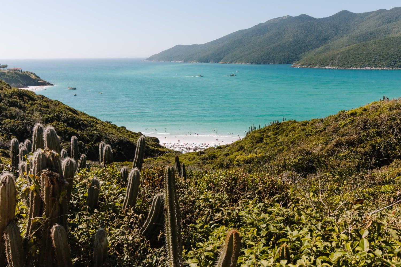 Kakteen vor türkisblauem Meer in Brasilien