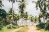 Palmen am Strand in Brasilien