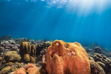 Die abwechslungsreiche Unterwasserwelt macht Curacao zu einem der besten tauchspots der Welt