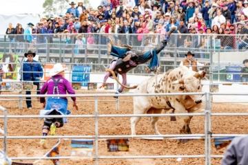 Rodeo in Tucson, Arizona