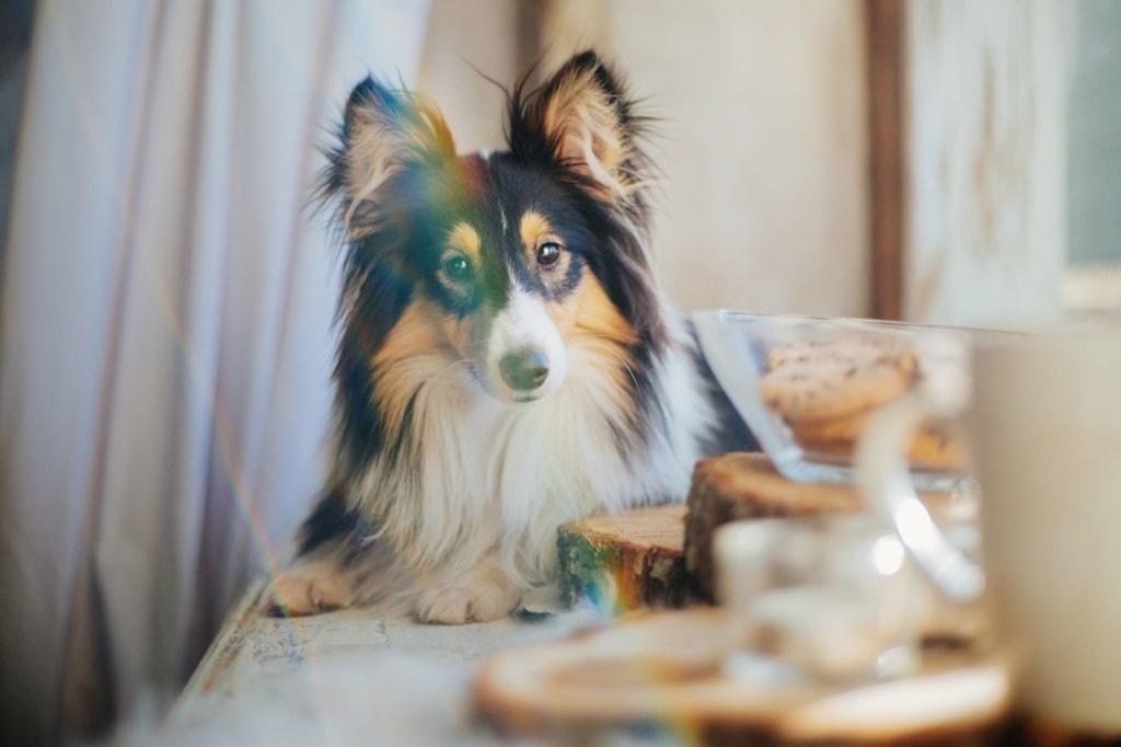 Hund beim Frühstück