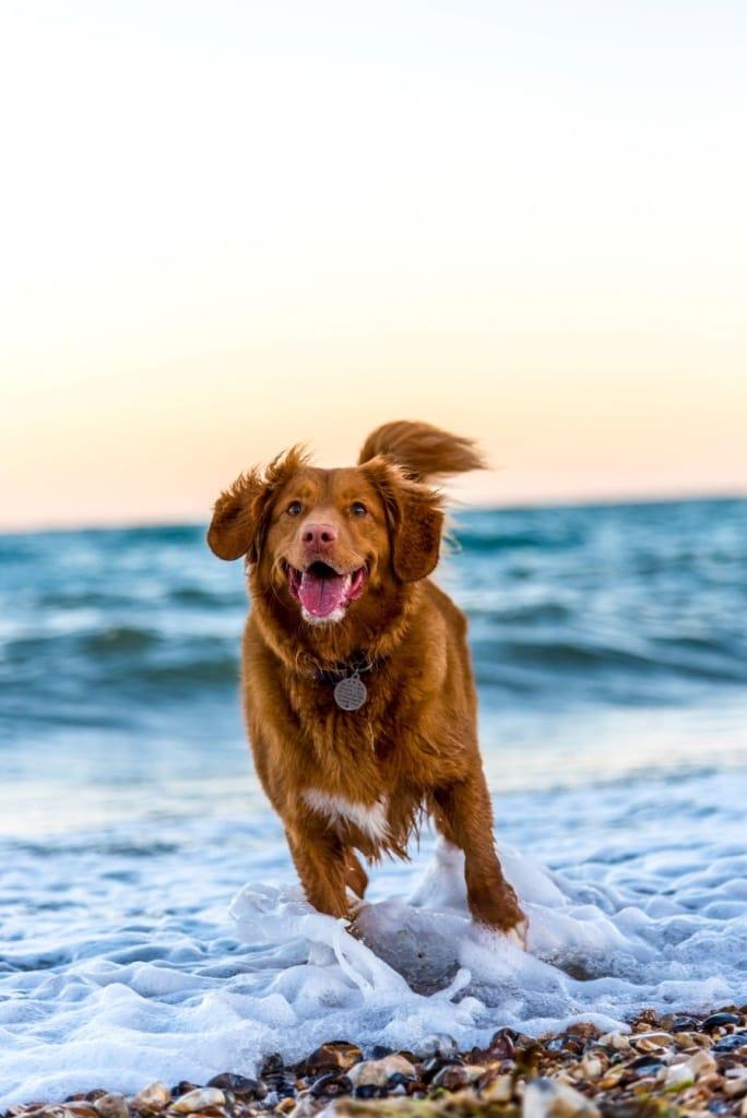 Hund tollt im Meer