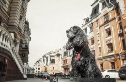 Hund in einer Stadt