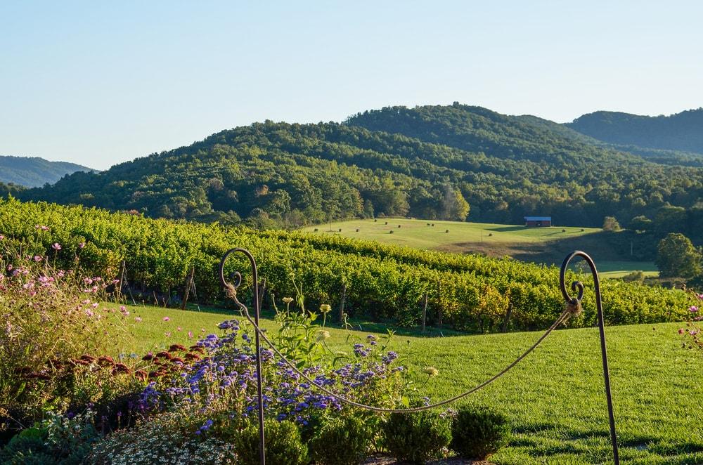 Weingut in Virginia