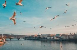 Skyline der tschechischen Hauptstadt Prag bei sonnigen Wetter