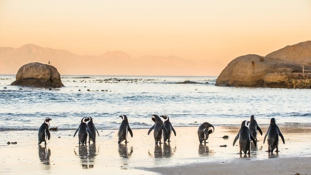 Strände in Südafrika: Boulders Beach