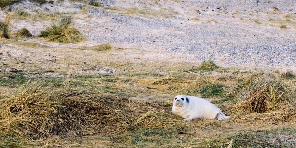Tipps für einen Urlaub an der Nordsee
