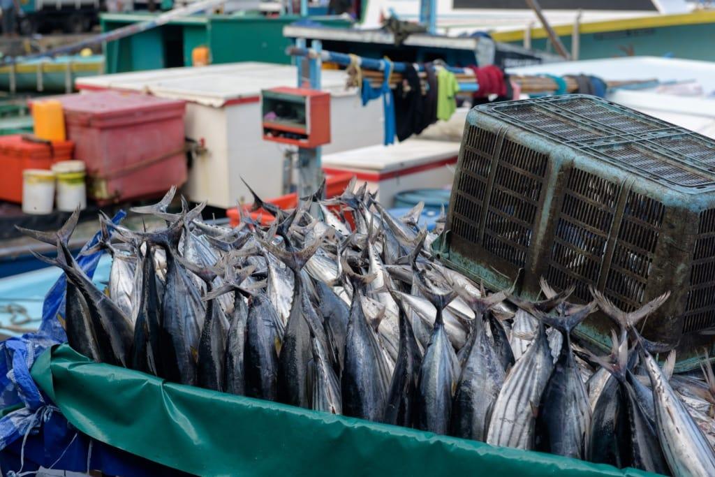 Auf den Märkten auf der Insel Male der Malediven gibt es vorallem eines: frischen Fisch.