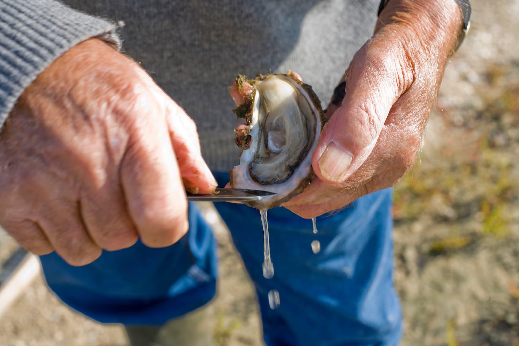 Mann öffnet Austern mit Messer