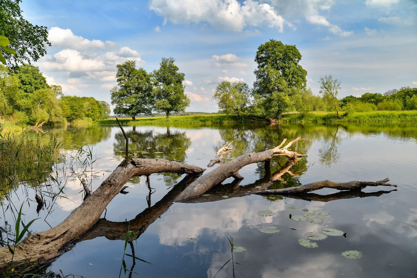 Nationalpark Unteres Odertal auf dem Märkischen Landweg