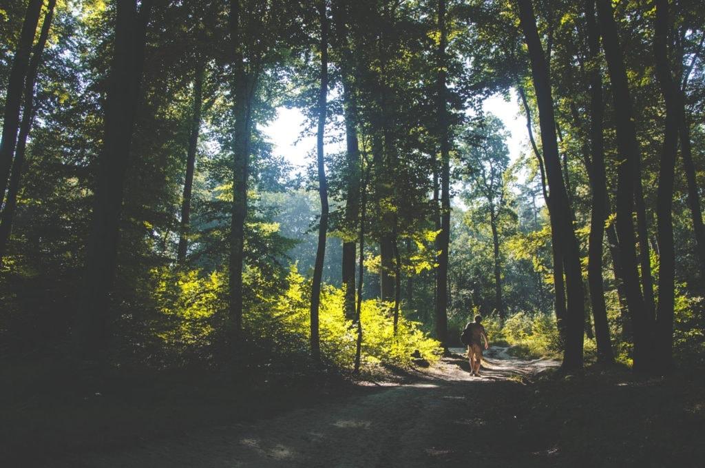Durch Wald und Wiesen in der Uckermark