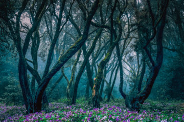 Zauberwald auf La Gomera