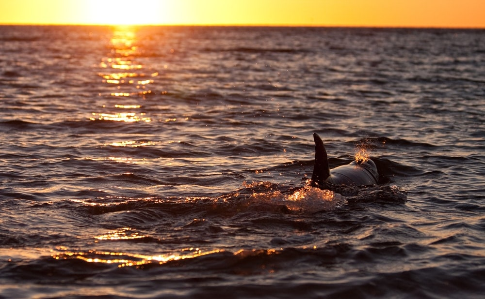 Delfine am Strand