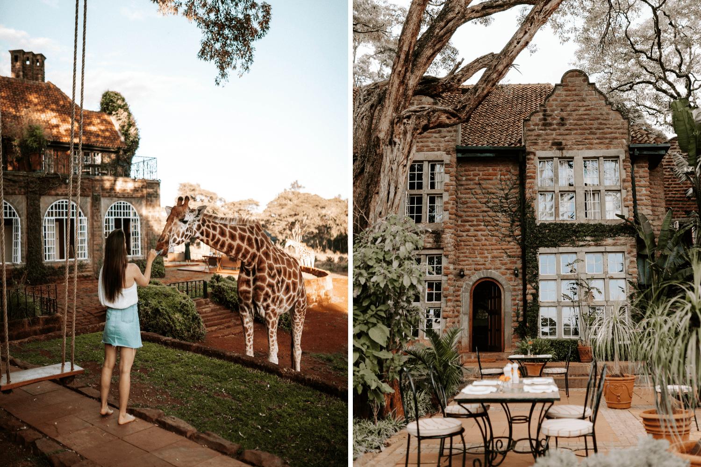 Mädchen füttert Giraffe in der Giraffe Manor in Kenia