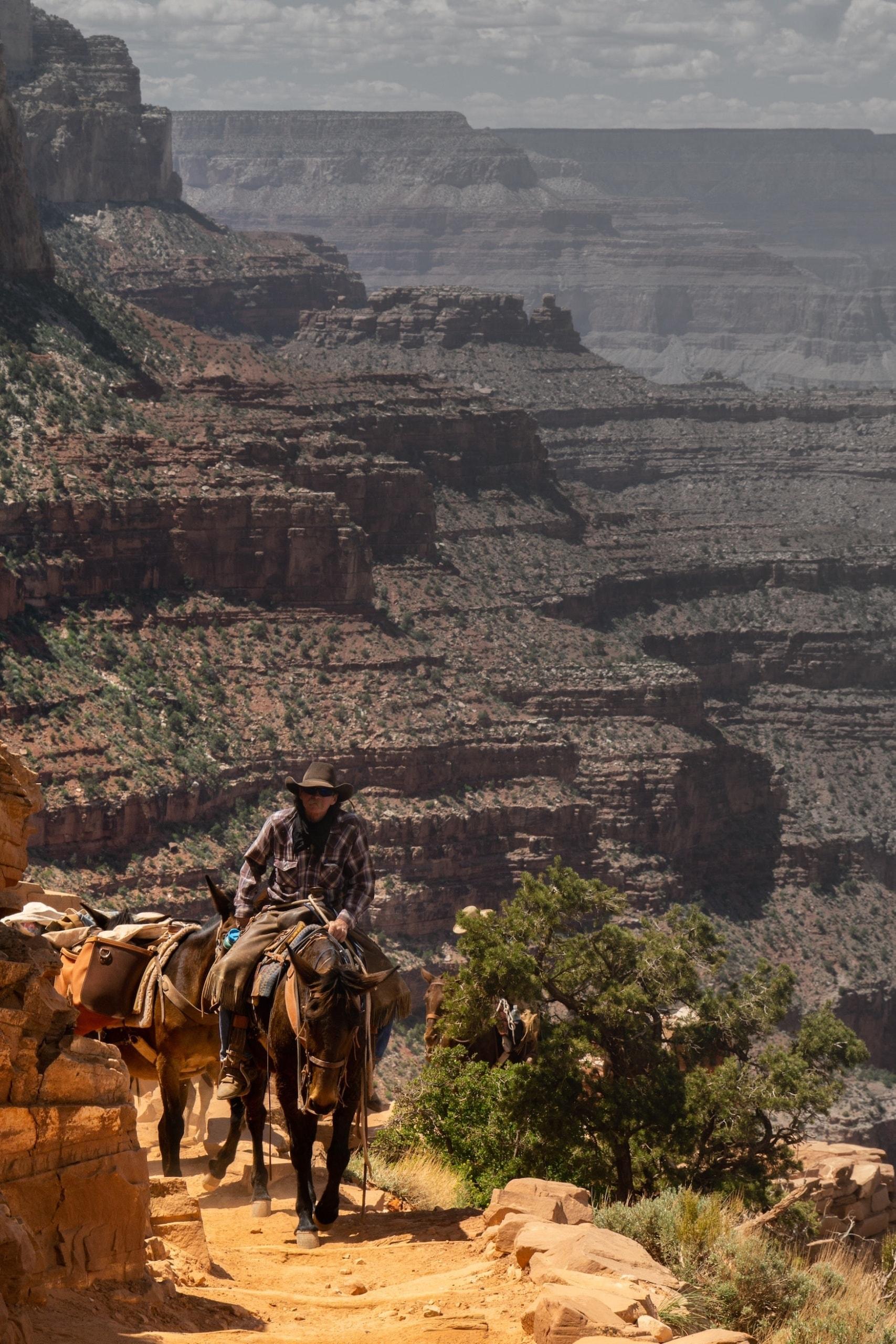 Mann sitzt auf Esel und reitet zum Grand Canyon