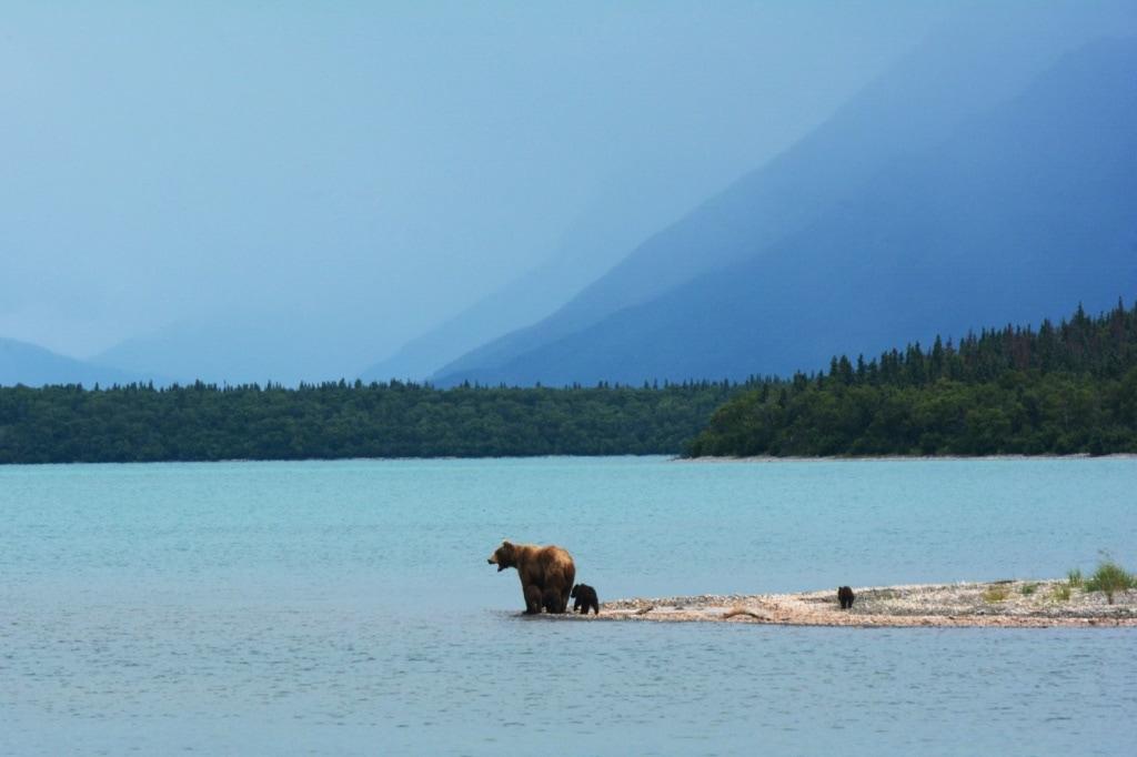 Bärenfamilie am Ufer eines Sees in Alaska
