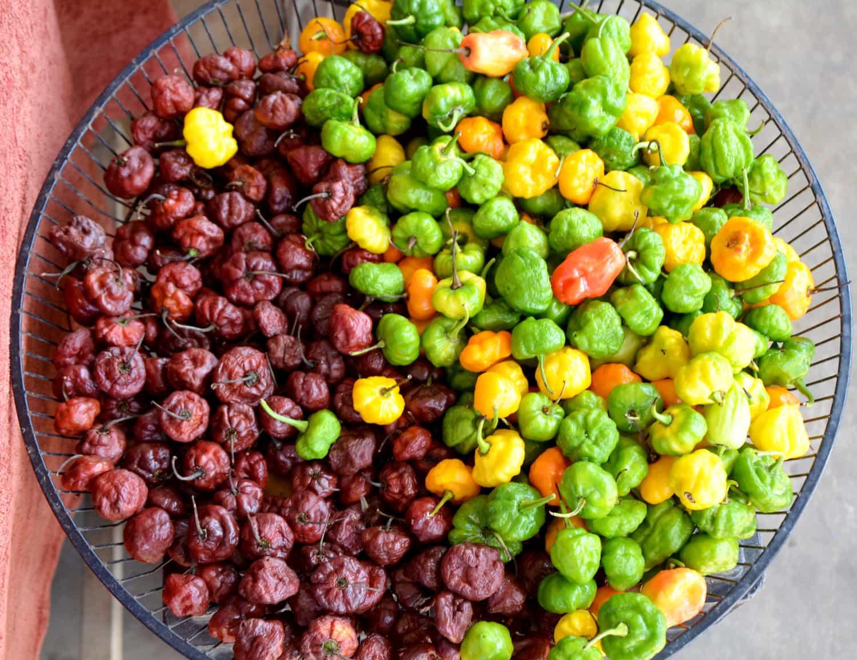 Rote, grüne und gelbe Chilis