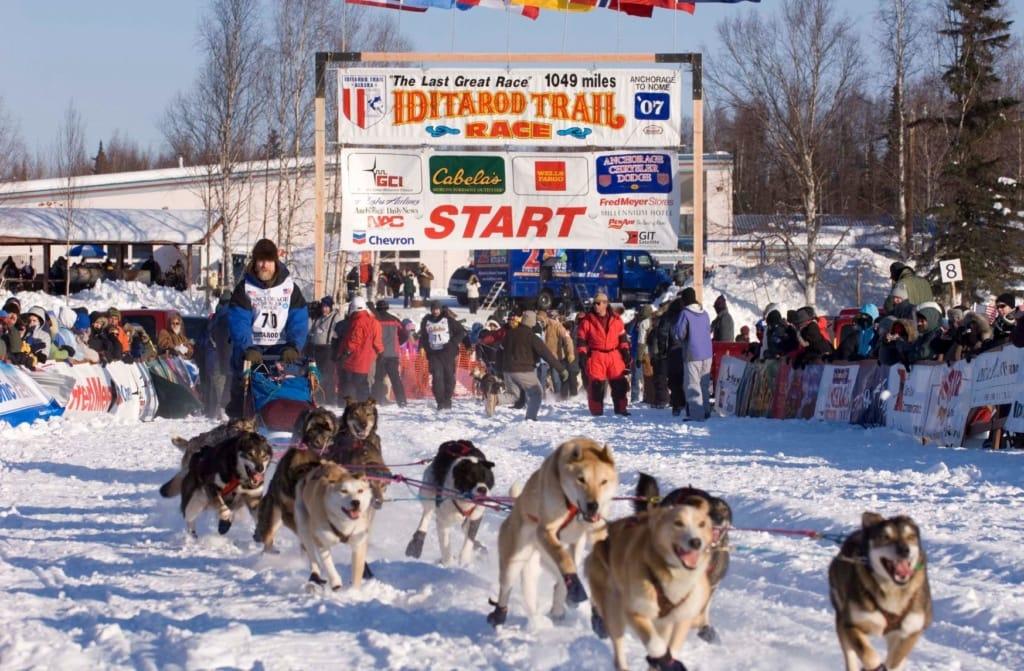 Hundeschlittenrennen in Alaska