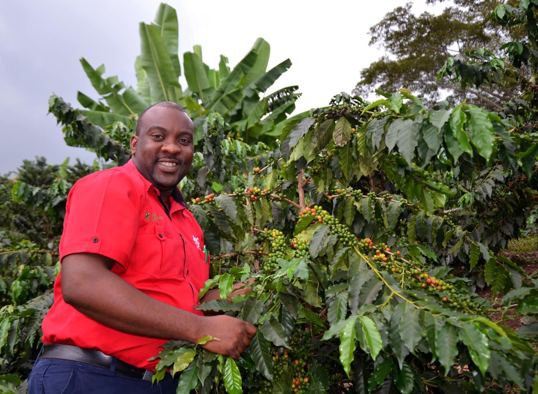 Mann auf einer Kaffee-Plantage in Jamaika