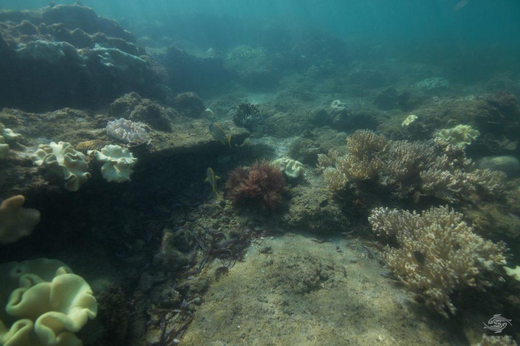 Taucher Alan Sutter entdeckte die Ruinen vor Thanda Island.
