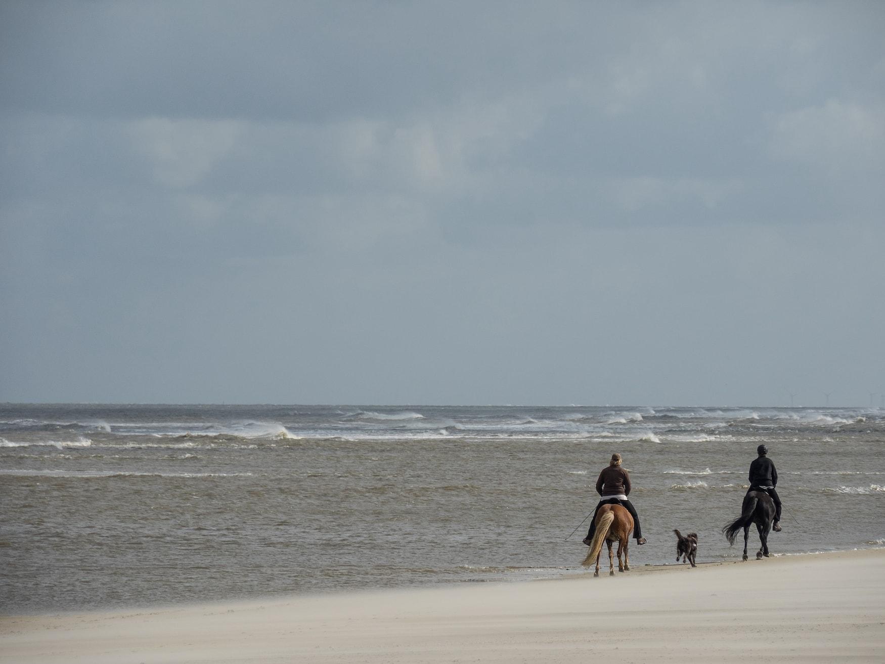 Pferdeausritt am Strand von Spiekeroog