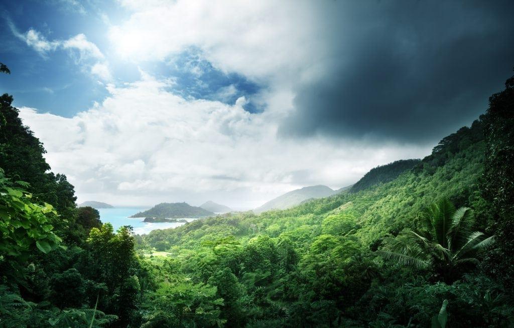 Die Natur auf den Seychellen ist einfach toll.