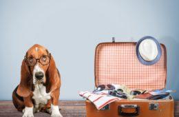 Hundefreundliche Hotels in England:
