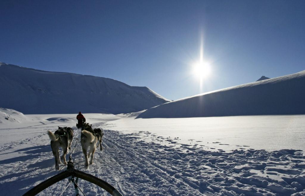 Spektakuläre Landausflüge während einer Kreuzfahrt: Schlittenfahrt auf Spitzbergen