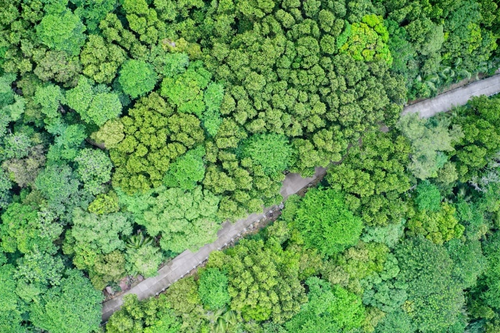 Das Landesinnere der Seychellen ist vor allem grün!