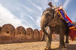 Mann auf Elefant sitzend in Jaipur
