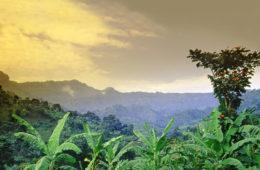 Blick auf die Natur im Mount Elgon Nationalpark in Uganda