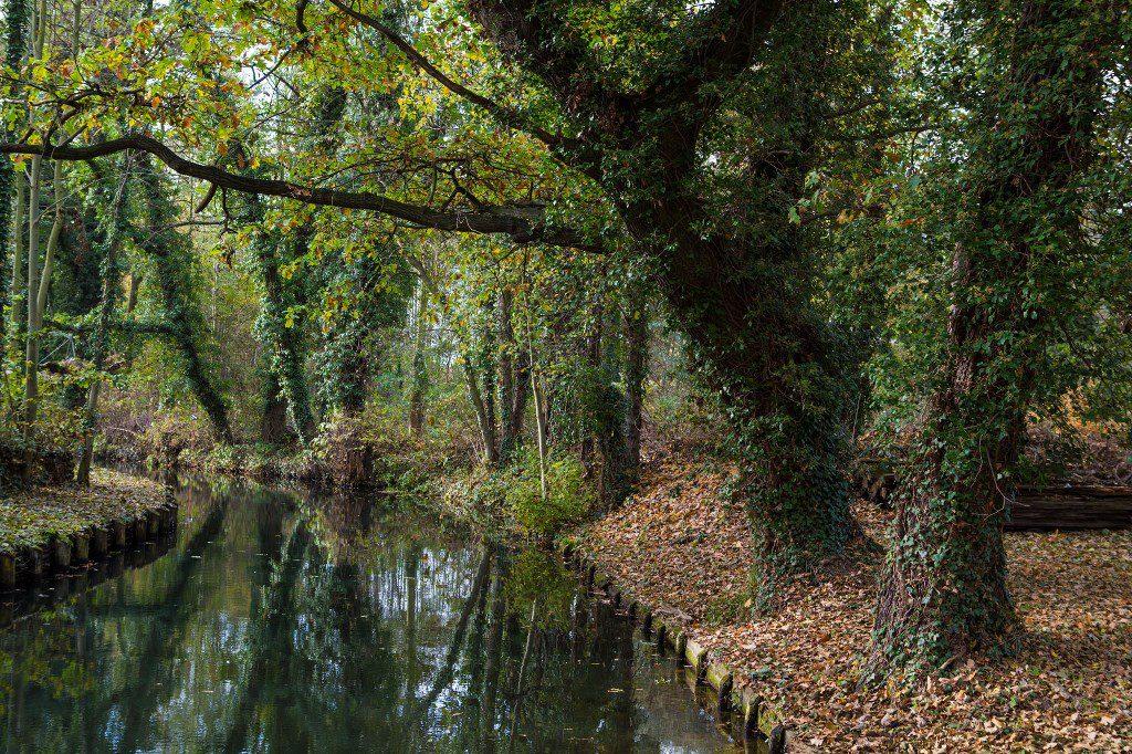 Im Spreewald, dem »Grünen Venedig Berlins«, gibt das Wasser das Tempo vor