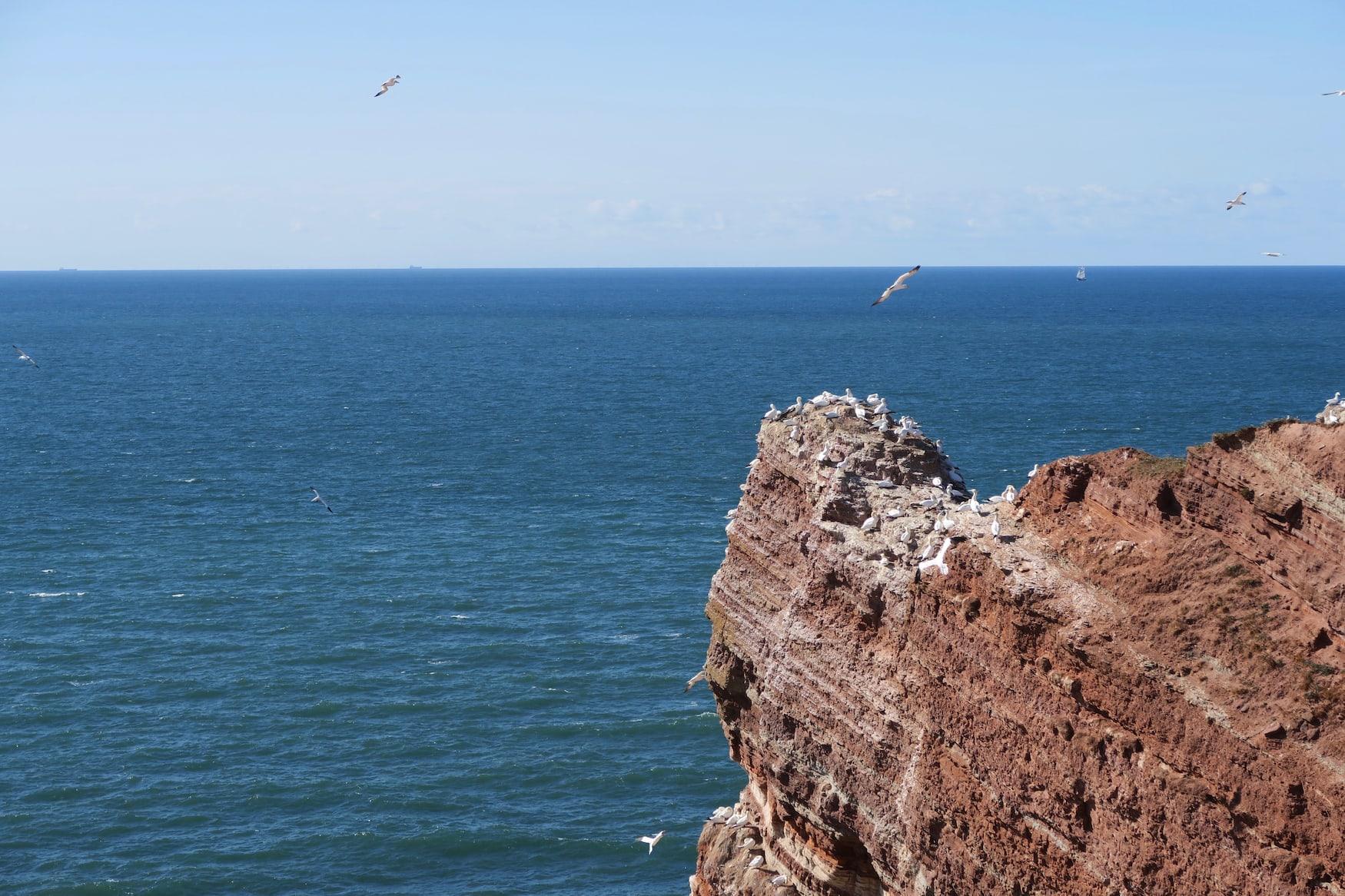 Zugvögel fliegen über Helgoland